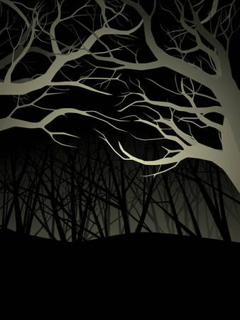 밤에는 불이 켜진 숲 캐노피