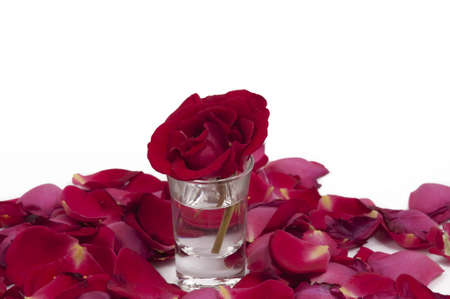 Red rose in a glass surrounded by petals Stock Photo