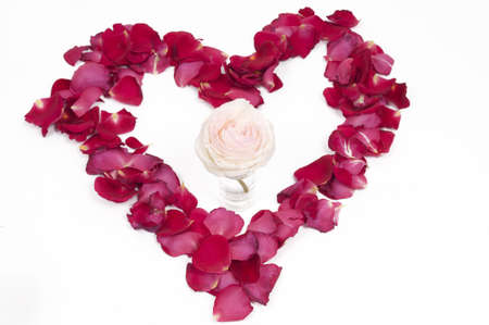 Pink Rose in a pertal heart on a white background Stock Photo