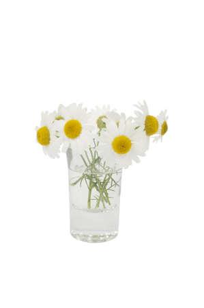 vulgar: Leucanthemum vulgare in a small vase Stock Photo