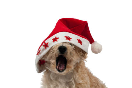 Christlmas Dog Yawning