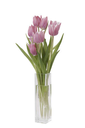 bunch of Tulips in a vase Stock Photo
