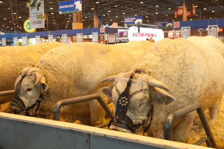 PARIS - FEBRUARY 26: The Paris International Agricultural Show 2012 -