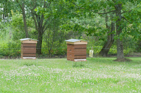 Beekeeping in green park