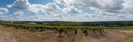 Panoramic of the vines of the  Coteaux du Layon  in the Anjou region in France