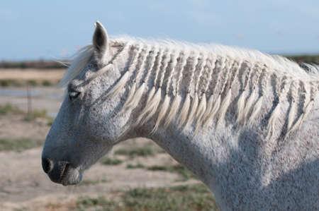 WHite Horse Profile and Salt marsh photo