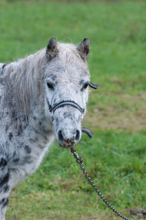 Sade Attached Pony