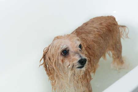 Washing the dog Stock Photo - 17169067