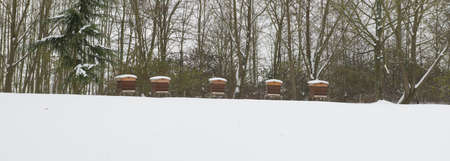 Aligned Beekeeping under the snow