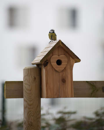 Bird on its home