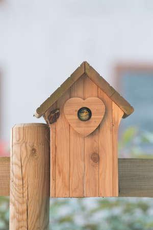 Newborn bird in the nest