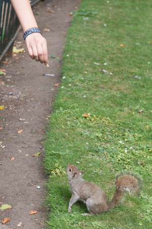 Give Food To Squirrel Stock Photo