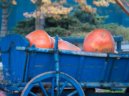 Pumpkins in blue old wagon with wooden wheel