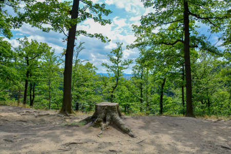 Beautiful view of Old Tree Stump in the summer forest