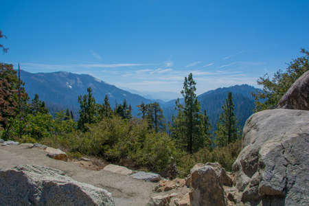 Lanscape Sequoia trees summer time blue sky