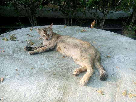 pussycat: Pussycat daytime sleep
