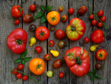 Assortment of fresh organic colorful tomatoes on wooden background. Top view.