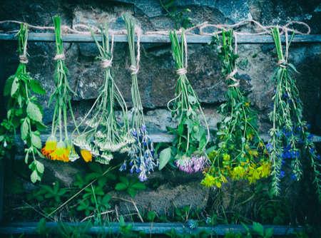 bunches of healing herbs - mint, yarrow, lavender, clover, hyssop, calendula, milfoil, herbal medicine
