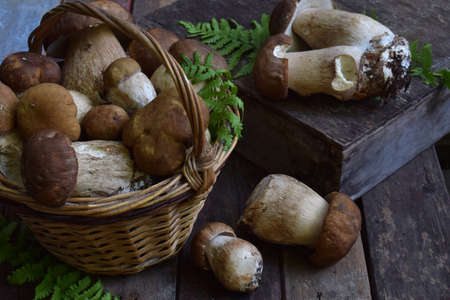 Composition of porcini in the basket on wooden background. White edible wild mushrooms. Copy space for your text. Stock Photo
