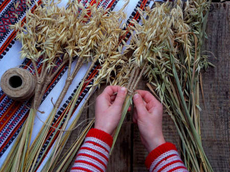 Making of Didukh of spikelets oats - Christmas, symbolic and ceremonial sheaf Ukrainian, symbolizing prosperity in the house and in the family Stock Photo