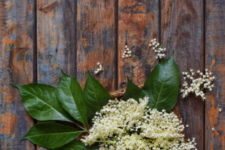Elderflower blossom flower in wooden background. Edible elderberry flowers add flavour and aroma to drink and dessert. Copy space