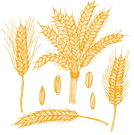 Wheat Ears Hand Draw Sketch.