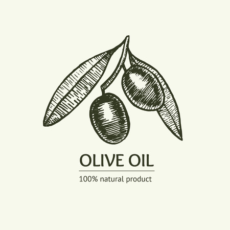 olive farm: Olive Hand Draw Sketch. Farm Eco Product. Vector illustration