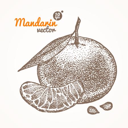 mandarin: Mandarin Card Hand Draw Sketch. Vector illustration