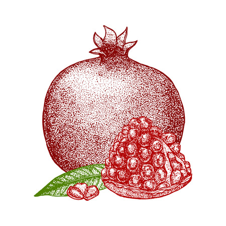 passion  ecology: Pomegranate with Seeds and Leaf Hand Draw Sketch. Vector illustration Illustration