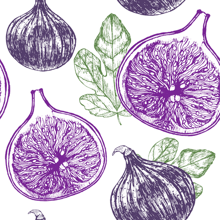 passion  ecology: Fig Fruit with Leaf Hand Draw Sketch Background Pattern. Vintage Style.  illustration
