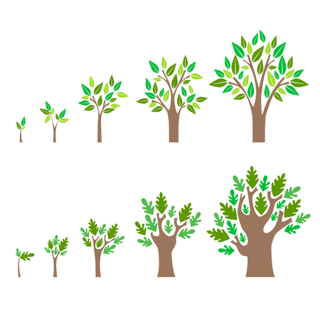 Estado de desarrollo de un conjunto de árbol. Estilo Diseño plana desarrollo de conceptos. ilustración vectorial