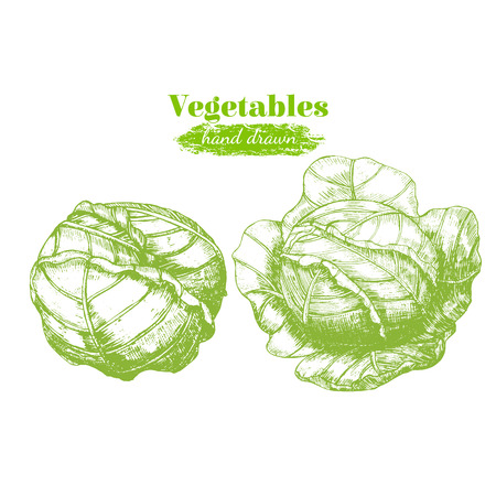 Cabbage Hand Draw Sketch. Vector Stock Photo