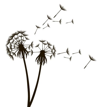 Dandelion Fluffy Flower and Seeds. Vector
