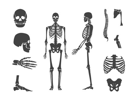 Silhouette Black Human Skeleton and Part Set. Vector Zdjęcie Seryjne