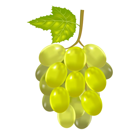 Realistic Detailed Green Bunch Of Grapes. Vector