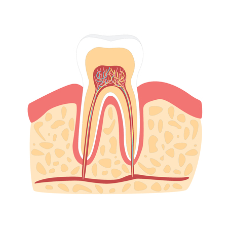 root canal: Cartoon Healthy Tooth. Vector