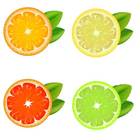 Realistic Detailed Citrus Set. Vector Illustration