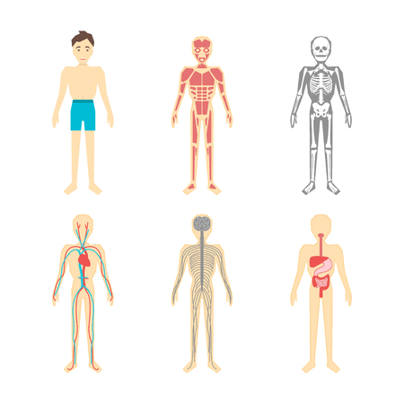 Different systems of human body diagram illustration stock photo 82833077 cartoon color human anatomical system set vector ccuart Images