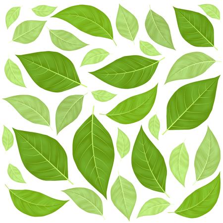 Green Leaves Pattern Background. Vector Illustration