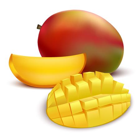 Realistic Detailed Fruit Mango. Vector illustration isolated on white background.  イラスト・ベクター素材