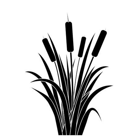 Black Water Reed Plant. Stock Illustratie
