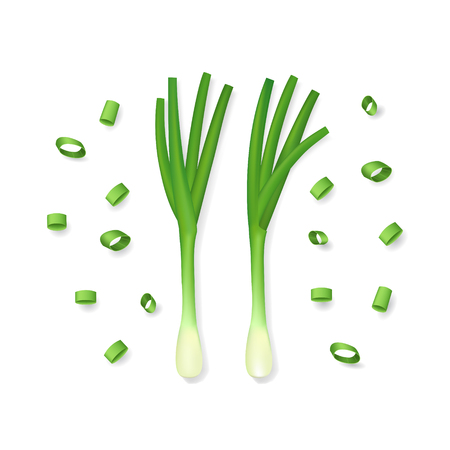 Realistic 3d Detailed Spring Onions. Vector Illustration