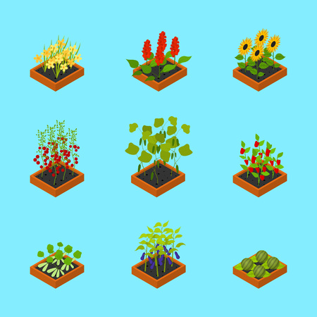 Plant Seedling Isometric View. Vector