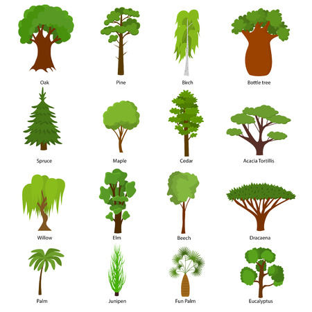 Different Green Tree Types and Name Include of Elm, Birch, Eucalyptus, Cedar, Dracaena, Oak and Pine Icons Set.