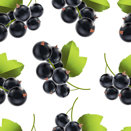 Realistic Detailed Ripe Black Berry Currant Background Pattern. Vector