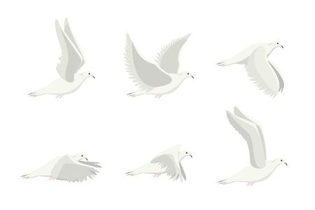 Cartoon White Dove Bird Set. Vector Vettoriali