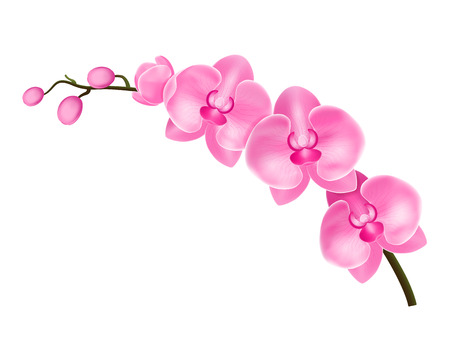 Realistic Detailed 3d Flower Orchid. Vector