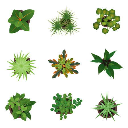 Realistic Detailed 3d Top View Green Plants Set.