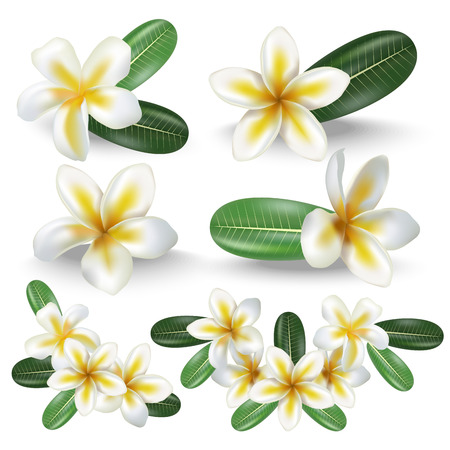 Realistic Detailed 3d Frangipani Flowers Set. Vector