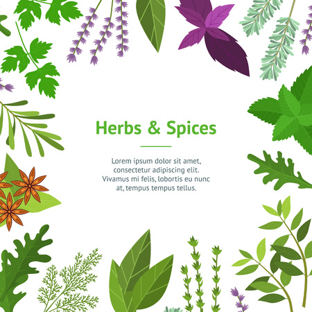 Cartoon Color Herbs Spices Card. Vector